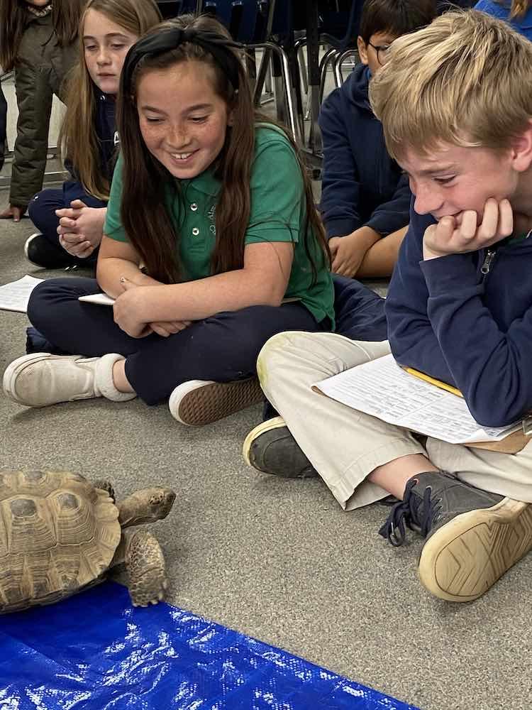kids gazing at turtle